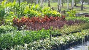 plants on kew wholesale nursery, mid north coast
