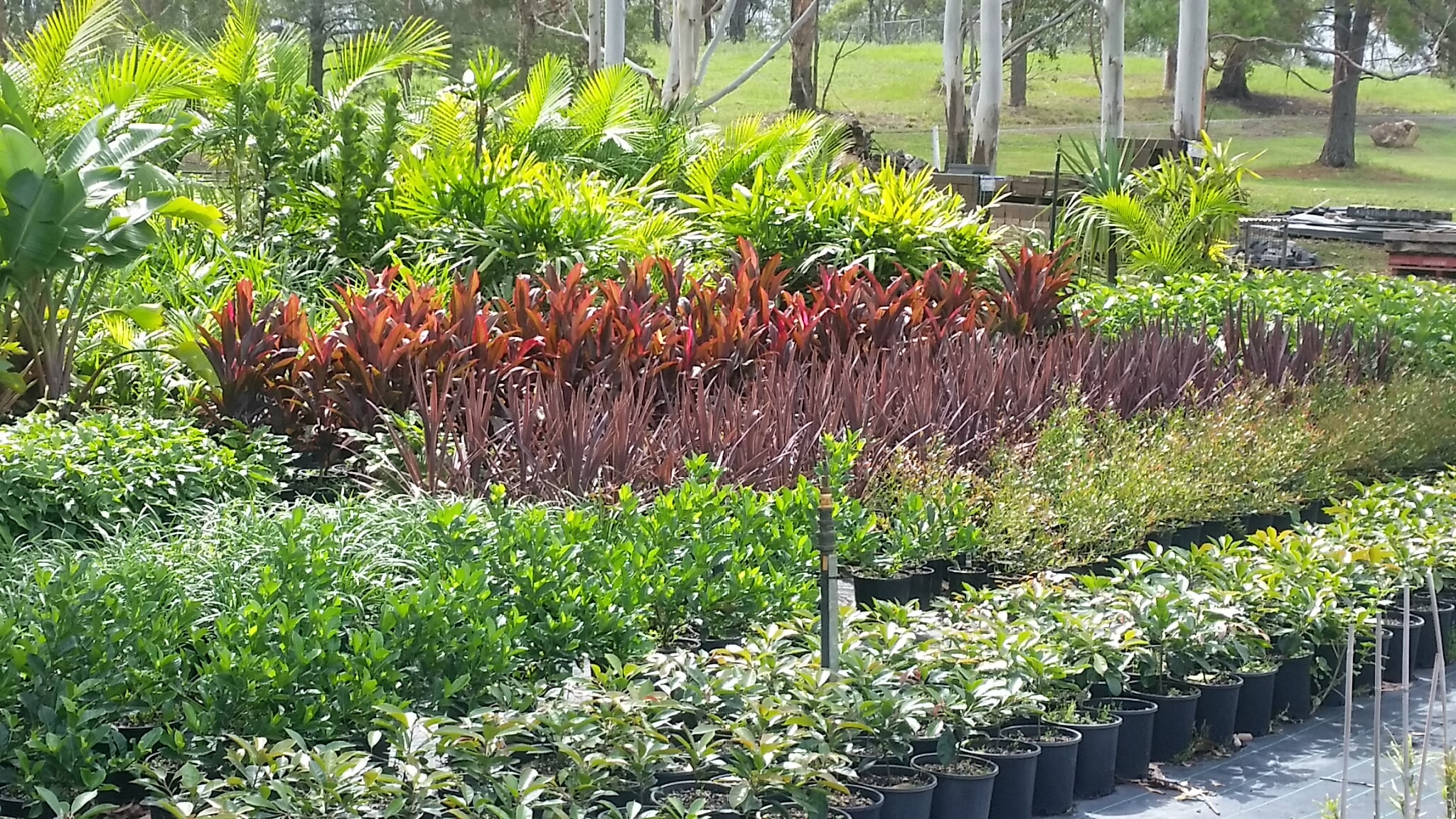 plants on kew wholesale nursery, mid north coast